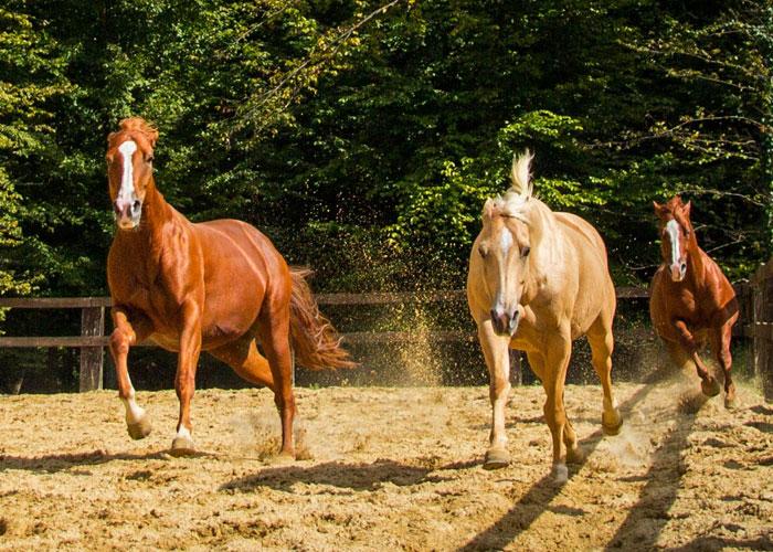 western-ranch-cowboy-djecja-igralista-zabava-za-djecu-izletiste